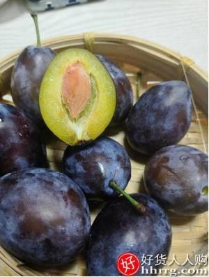 interlace,1# - 阳山尹城新疆西梅新鲜5斤,正宗喀什法兰西甜西梅当季水果李子