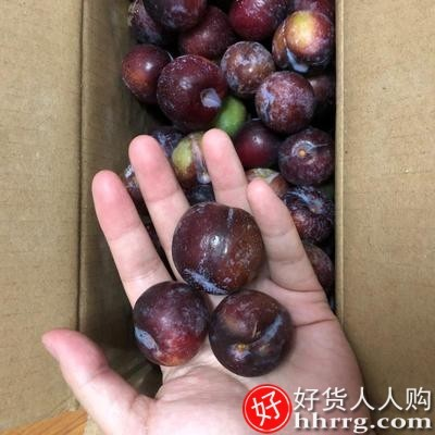 interlace,1# - 红高粱四川脱骨李子9斤,应当季黑布林水果蜂糖李整箱三华李包邮