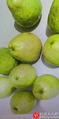 interlace,1# - 福瑞达番石榴红心芭乐水果,新鲜当季软糯胭脂红脆甜巴乐