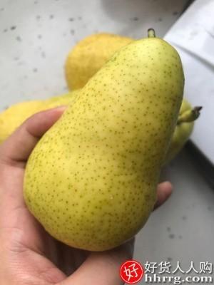 interlace,1# - 一统果家太婆梨,应当季现摘东北茄梨大头梨香蕉梨